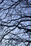 замысловатость на ветвях дерева стоковое изображение