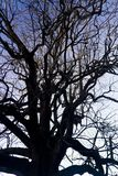 замысловатость на ветвях дерева стоковое фото