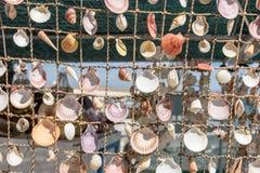 Занавесы от раковин моря красивых красочных от моря Стоковые Фото
