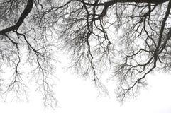 Занавес ветвей стоковые изображения rf