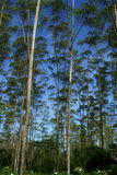 занавес естественный Стоковое фото RF