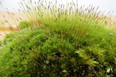 Занавес зеленого цвета мха весны свежий стоковое изображение