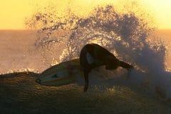 заниматься серфингом захода солнца Стоковые Изображения RF