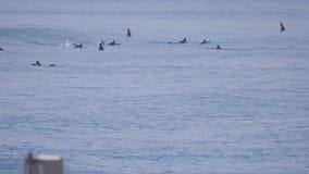 Занимающся серфингом на пляже Maehara, Chiba, Япония акции видеоматериалы