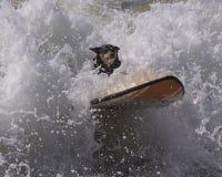 Занимаясь серфингом wipeout собаки Стоковые Изображения RF