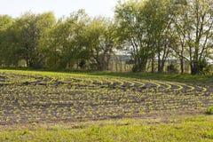 Заново засаженные урожаи Стоковое Изображение RF