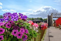 Заново засаженные цветки увиденные на пограничном заборе на старом железнодорожном вокзале Стоковая Фотография
