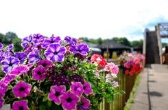 Заново засаженные цветки увиденные на пограничном заборе на старом железнодорожном вокзале Стоковое Фото
