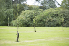Заново засаженный сад Стоковые Изображения RF