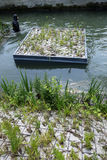 Заново преобразованные речные берега Сены Стоковая Фотография