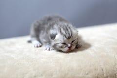 Заново принесенный котенок Стоковая Фотография RF