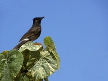заносчивая птица Стоковое фото RF