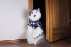 Заносчивый кот в двери квартиры Стоковая Фотография
