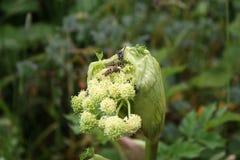Занятые пчелы на большом национальном парке 1 закоптелой горы стоковое фото rf