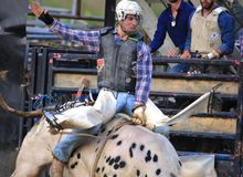 Западное катание быка ковбоя на родео Стоковые Фотографии RF
