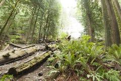Западное побережье Rainforrest Стоковые Фотографии RF