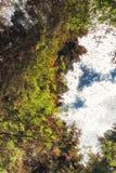 Запас биосферы бабочки монарха, Michoacan, Мексика Стоковые Изображения RF
