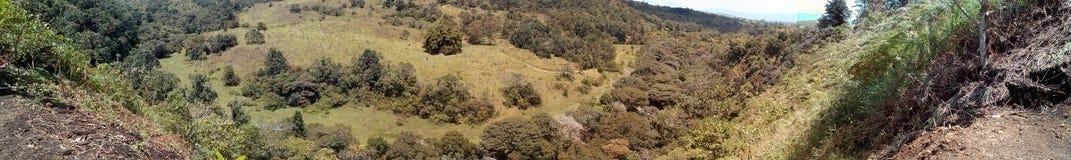 Запас леса Стоковое Фото