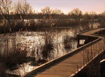 Запас живой природы Camargue национальный Стоковое Изображение RF