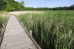 Запас парка Elmo озера стоковые фотографии rf