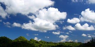 Запас Пуэрто-Рико леса Guajataca Стоковые Фото