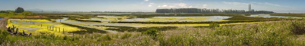 Запас Elkhorn Слау, залив Монтерей, Калифорния стоковое фото rf