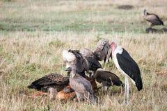 запас masai mara Стоковая Фотография RF