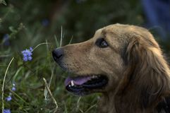 Запахните цветками Стоковая Фотография