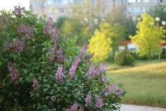 Запах лета Стоковое фото RF