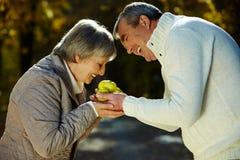 запах яблок Стоковые Фото