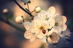 Запах spring_3 Стоковая Фотография