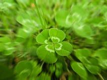 запачкайте движение листьев клевера 4 стоковые фотографии rf