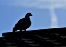 Запачкайте подсвеченный силуэт птицы садить на насест на крыше Стоковая Фотография RF