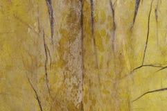 Запачкайте предпосылку, сухие солёные лист крупного плана морской водоросли Стоковые Фото