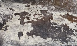 Запачкайте dappled предпосылку, сухие солёные лист крупного плана морской водоросли Стоковая Фотография RF