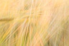 Запачканная желтая абстрактная предпосылка с преобладанием линий Стоковое фото RF