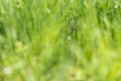 Запачканная зеленая предпосылка природы Стоковая Фотография