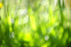 Запачканная зеленая предпосылка Стоковая Фотография RF