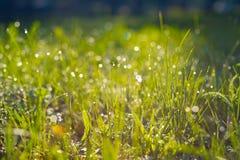 Запачканная зеленая предпосылка состоит из зеленой сочной травы с росой Стоковое Фото