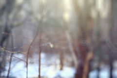 Запачканная зима предпосылки предыдущая Стоковые Изображения RF
