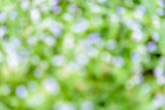 Запачканная конспектом предпосылка природы стоковое изображение
