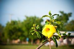 Запачканная конспектом предпосылка цветка Стоковое фото RF