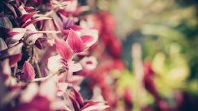 Запачканная конспектом предпосылка цветка Стоковые Фотографии RF