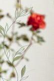 Запачканная красная роза абстракции Стоковые Изображения RF