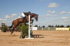 запачканная лошадь Стоковая Фотография