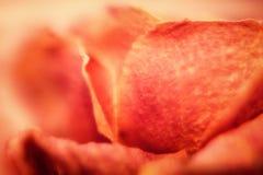 Запачканная оранжевая флористическая абстрактная предпосылка Стоковые Изображения RF