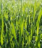 Запачканная предпосылка зеленой травы Стоковое Изображение