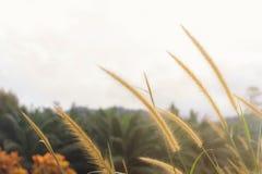 Запачканная предпосылка природы Стоковые Фото