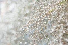 Запачканная предпосылка травы с падениями росы Стоковое Изображение RF