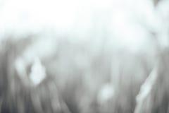 Запачканная предпосылка деревьев стоковое изображение rf